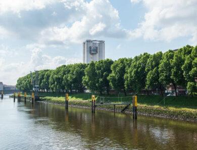 136 Platanen retten – Bremen sammelt Unterschriften
